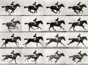 Eardweard Muybridge horse